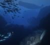 twilight diving