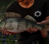 Euro_Fishing_Bergsee_DLC_Screenshot_010
