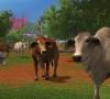Farming_Simulator_17_Platinum_Edition_Launch_Screenshot_05