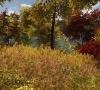 Walden_A_Game_Launch_Screenshot_03